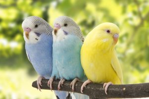 oiseaux serre d'angresse